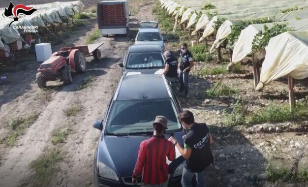 Maxi operazione anti-caporalato nel Foggiano: braccianti costretti a lavorare 16 ore al giorno: 10 misure cautelari