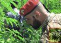 Scoperta piantagione di marijuana a Cagnano Varano: denunciato 29enne