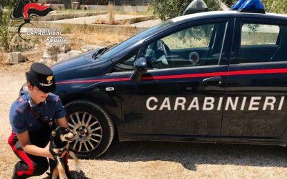 Legato ad un tronco sotto il sole: Carabinieri salvano cane denutrito